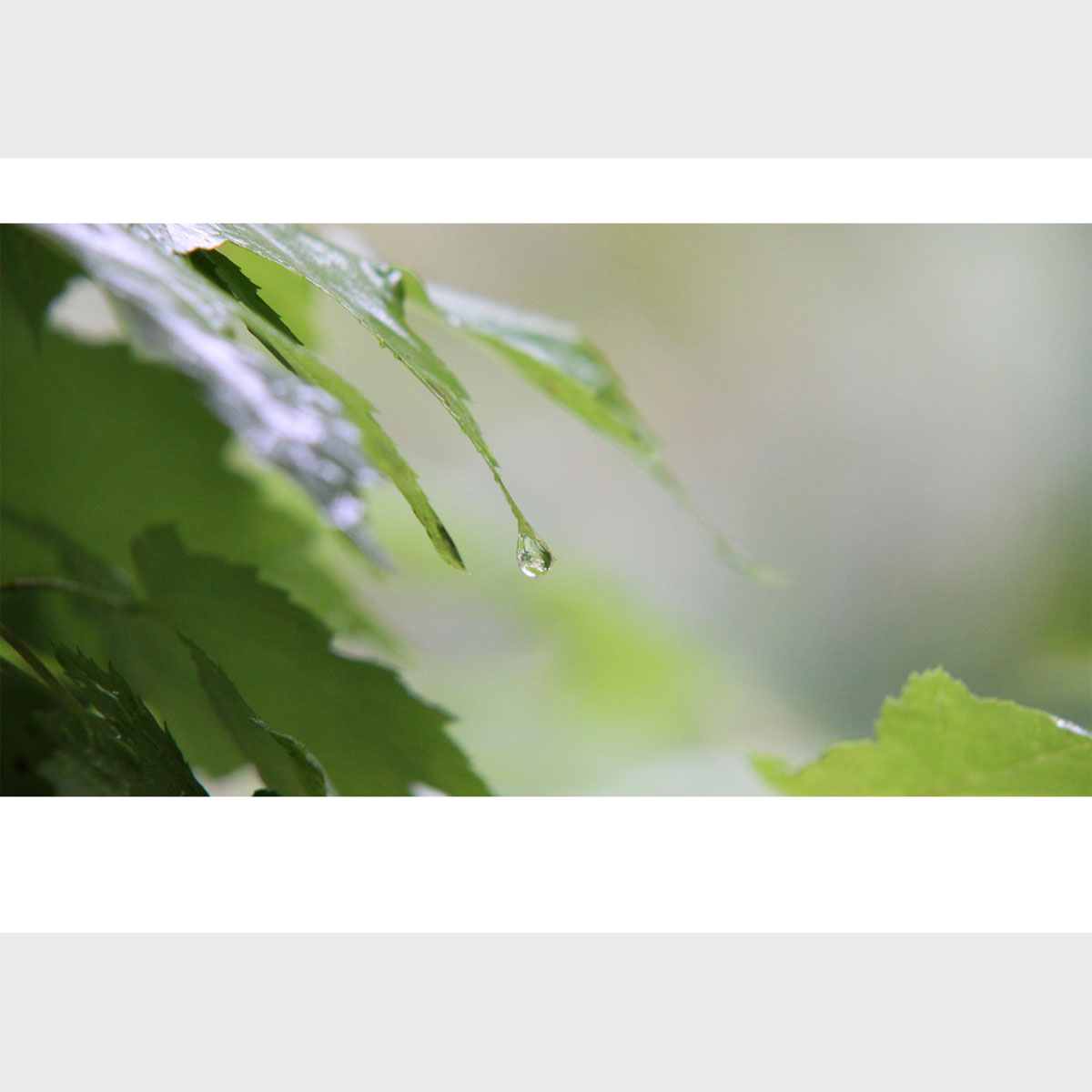 Premium Greeting Card, Raindrop