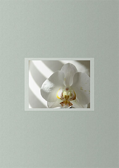 Premium Greeting Card, Bacchantes