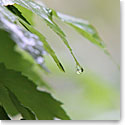 Premium Greeting Card, Raindrop
