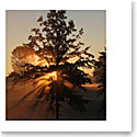 Premium Greeting Card, Sunrise