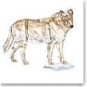 Swarovski SCS Gray Wolf