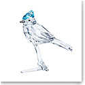 Swarovski Feathered Beauties Blue Jay