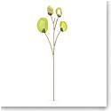 Swarovski Flowers Garden Tales Eucalyptus