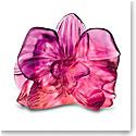 Daum Orchid Flowers Decorative Flower