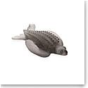 Daum Leatherback Turtle
