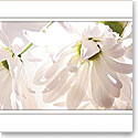 Premium Greeting Card, Daisies