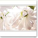 Premium Greeting Card, Daisies