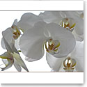 Premium Greeting Card, White Orchids