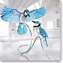 Swarovski Crystal, Paradise Pair of Blue Jays
