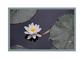 Premium Greeting Card | Waterlilly